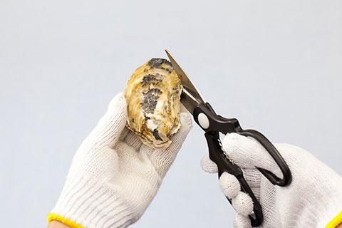 牡蠣の開け方1