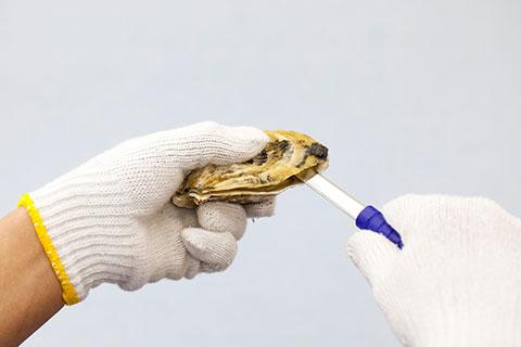 牡蠣の開け方3