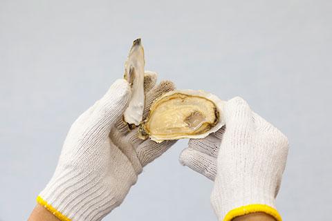 牡蠣の開け方4