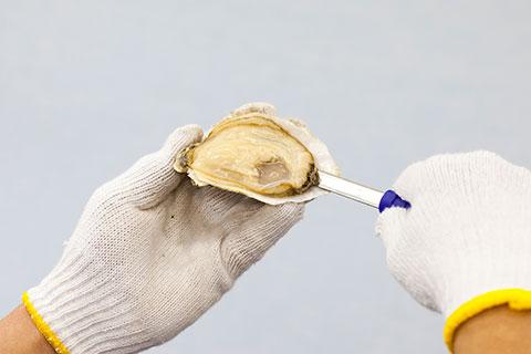牡蠣の開け方5